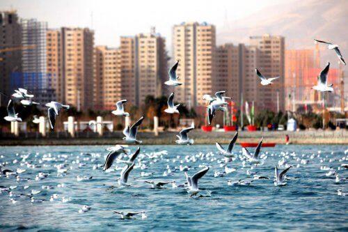 دریاچه خلیج فارس -مکان های دیدنی تهران برای عکاسی