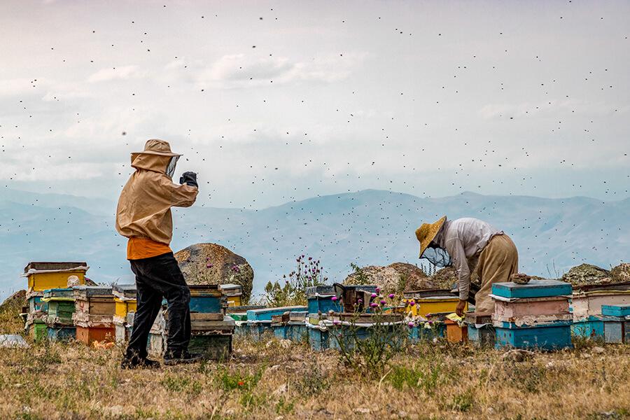 عکاسی مستند طبیعت در کادرو